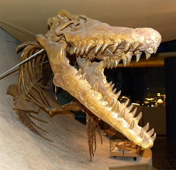 Эволюция мазозавров с точки зрения Юхана Линдгрена