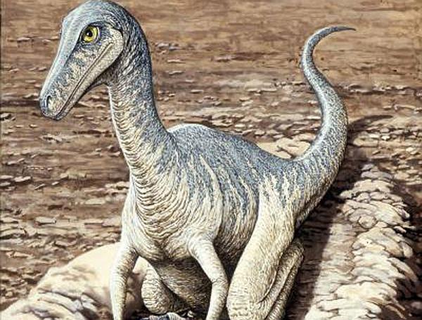Арктические динозавры не доживали до 20 лет