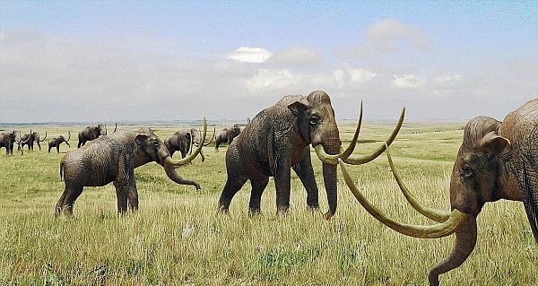 Древние жители Флориды застали гигантских млекопитающих