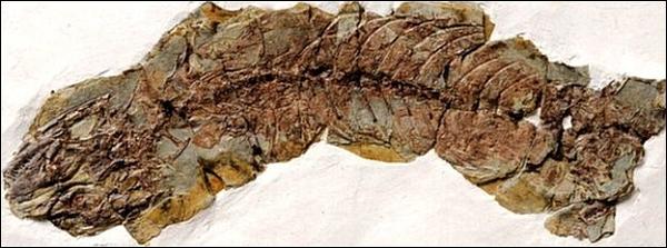 Обнаружили древнейшую беременную ящерицу