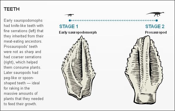 Эволюция зауроподов